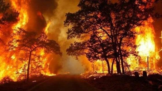 Incendi: 47 roghi in Sicilia, Palermo ed Enna le più colpite