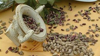 Bronte, in crisi per la siccità i produttori di pistacchio: il sindaco chiede lo stato di calamità