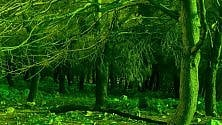 """Il filtro di Di Giugno per """"salvare"""" i boschi"""