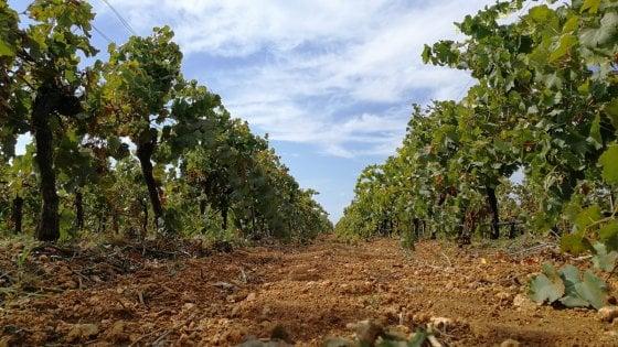 In viaggio fra i filari: in pulmino alla scoperta dei vini di Sicilia/2