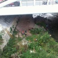 Palermo: il cane finisce nel fiume, salvato dai vigili del fuoco