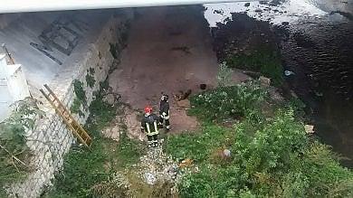 Palermo: il cane finisce nel fiume  salvato dai vigili del fuoco  foto