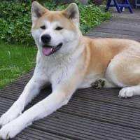 Palermo, boom di controlli e kit gratuiti contro gli escrementi di cane