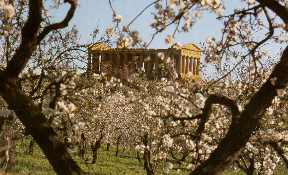 Il mandorlo in fiore di Agrigento diventa un bene tutelato