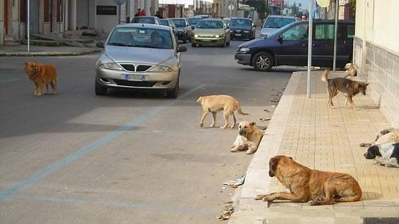 Randagismo, il piano della Regione: saranno sterilizzati 30mila cani