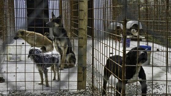 Palermo: arrestato il questuante che chiedeva soldi per i cani