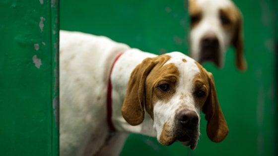 Sicilia Ancora Avvelenamenti Di Cani Un Cucciolo Trovato Morto A