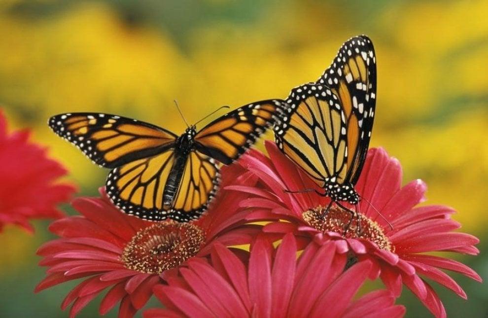 Siracusa accanto al tempio di artemide arriva la casa - Immagini di farfalle a colori ...