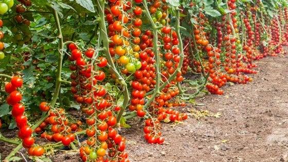 Siracusa, incendio doloso in un'azienda leader dell'export di pomodori di Pachino