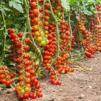 Siracusa, incendio doloso in un'azienda leader dell'export di pomodori di