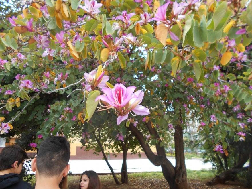 Palermo, alle medie si studiano i fiori esotici