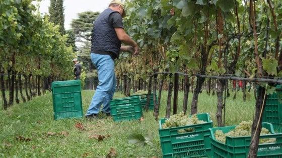 Zucchero per alterare vino: sequestrate 900 tonnellate provenienti dall'estero