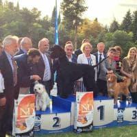 Favorita: più di mille cani in passerella, la vittoria a Indio