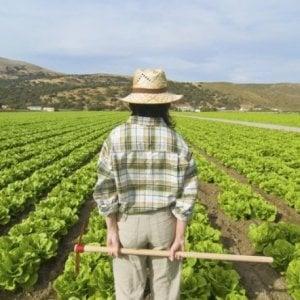 """Agricoltura, 5000 giovani bloccati da burocrazia Sicilia. Coldiretti: """"Ferme le richieste per avviare un'azienda"""""""