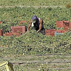 Ragusa, migranti albanesi sfruttati nei campi e costretti a vivere in fogne a cielo aperto