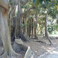 L'Orto botanico ospita i versi di Shakespeare, Vasco a Messina: gli appuntamenti
