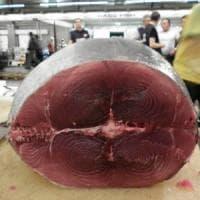 Vendita fuorilegge di tonno rosso: sequestrati 2.200 chili di pese