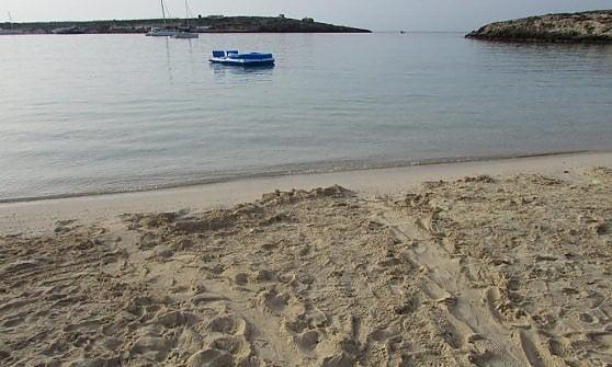 Lampedusa, una tartaruga caretta caretta fa il nido alla Guitgia