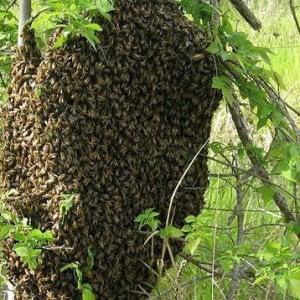 Assalito dalle vespe: Siracusa, muore a 82 anni