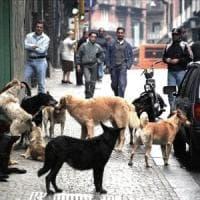 Azzannato da un cane bimbo di 7 anni: stava giocando in strada con gli amici