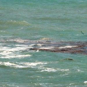 Alga tossica: divieto di balneazione sul lungomare di Trapani