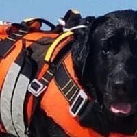 Palermo, il cane-eroe Otto salva un tredicenne in mare a Mondello