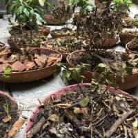 Palermo, seccano le piante di una mostra di Manifesta