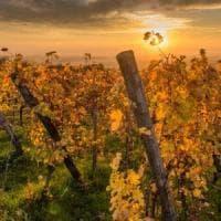 Pantelleria: maxi furto di zibibbo, serviva per il passito pregiato
