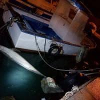 Nel mare in provincia di Palermo un delfino morto: