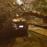 Palermo, notte di pioggia: si contano i danni. Alberi sulle auto e strade