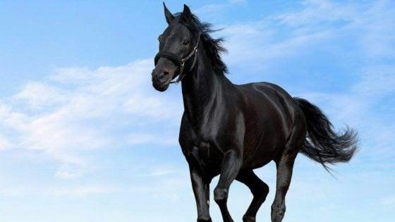 Monreale, cavallo lanciato al galoppo sulla circonvallazione