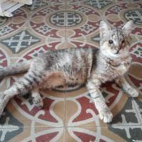 Salvata a Lipari, adottata a Bergamo: storia di Lucia, gattina cieca salvata a distanza