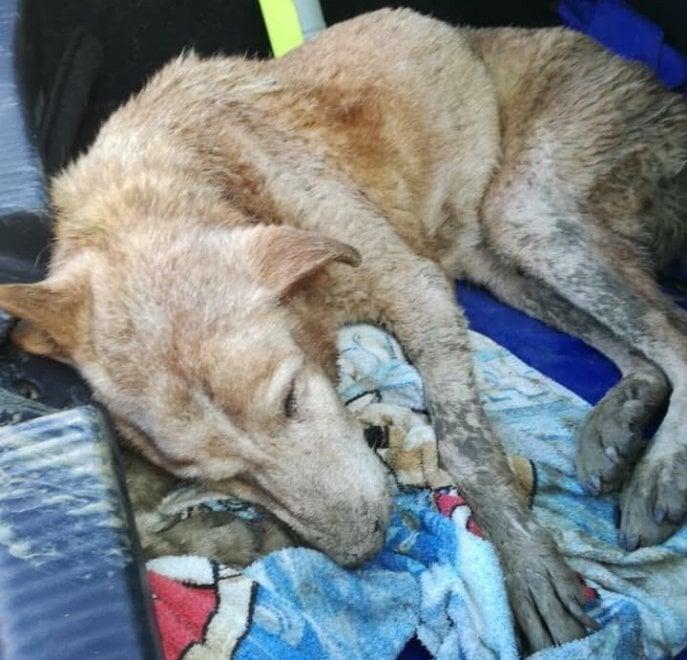 Maltempo, ad Agrigento 100 cani intrappolati: adesso sono stati salvati