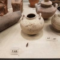 Siracusa, nelle teche coi vasi greci escrementi di topo