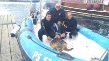 Palermo, la polizia salva una tartaruga ferita