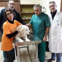 Lampedusa: i volontari Lav tornano ad aiutare i cani e i gatti dell'isola