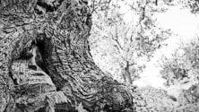 Palermo, la natura del Mediterraneo negli scatti di otto giovani fotografi