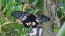"""La """"Casa delle farfalle""""    al Museo Riso"""