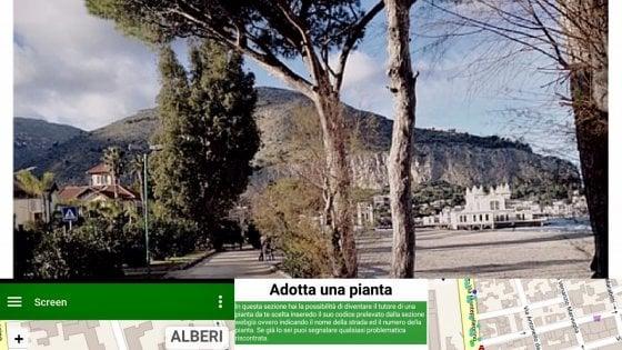 Una App censisce gli alberi di Palermo. E adesso si possono pure adottare