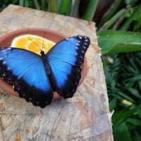 Gigante o bianca: ecco la Casa delle farfalle