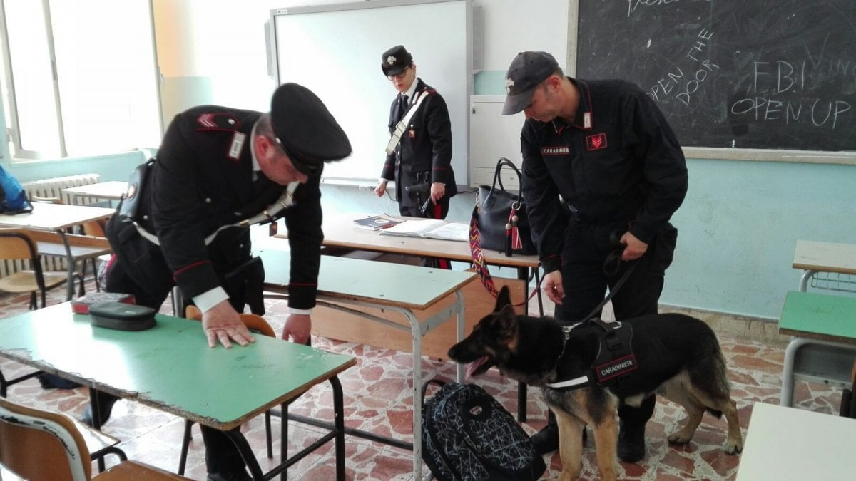 Palermo dopo i cani antidroga al liceo umberto lettera for Liceo umberto palermo