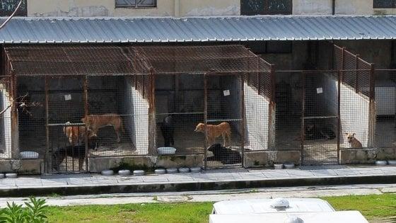 Palermo, i primi cinque animali lasciano il canile scortati dai carabinieri