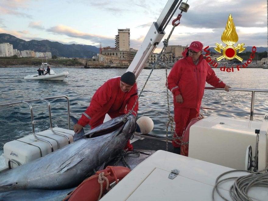 Palermo, al via la stagione della pesca di frodo: sequestrati tonni nascosti sott'acqua