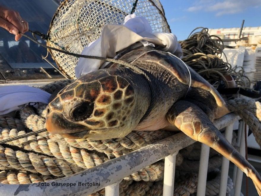 Ustica: salvato un esemplare di tartaruga Caretta caretta