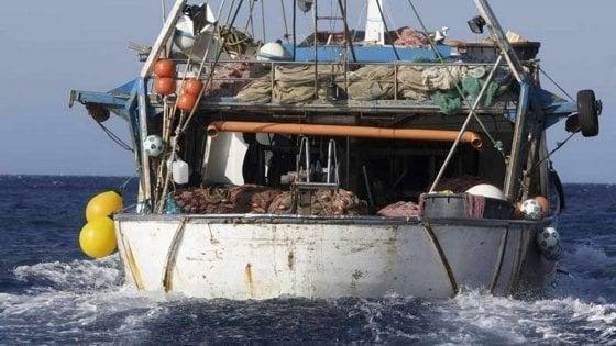 Stop della Ue alla pesca di nasello e gambero rosa nel Canale di Sicilia: è polemica