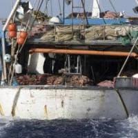 Stop della Ue alla pesca di nasello e gambero rosa nel Canale di Sicilia: