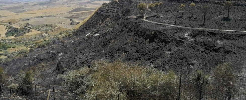 Aidone, coro di proteste per il degrado del parco archeologico di Morgantina