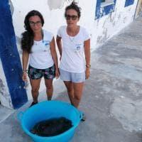 Linosa: tartaruga ingoia ami, salvata da diportisti e curata all'Area Marina Protetta