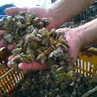 Frutti di mare imposti ai ristoranti di Mondello e Sferracavallo, tre ordinanze