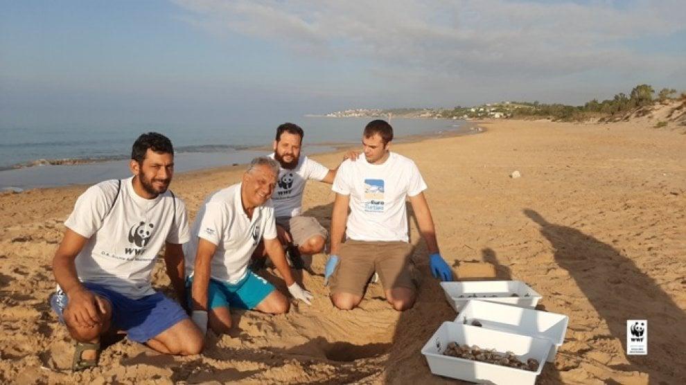 Menfi, cinquanta piccole tartarughe liberate in mare dal Wwf